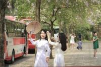 Hoa Ban nở rộ khoe sắc trắng tinh khôi ở Hà Nội