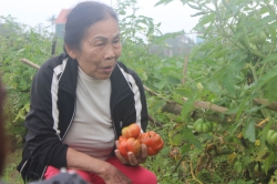 Hà Tĩnh: Lắp camera chống trộm cho... rau